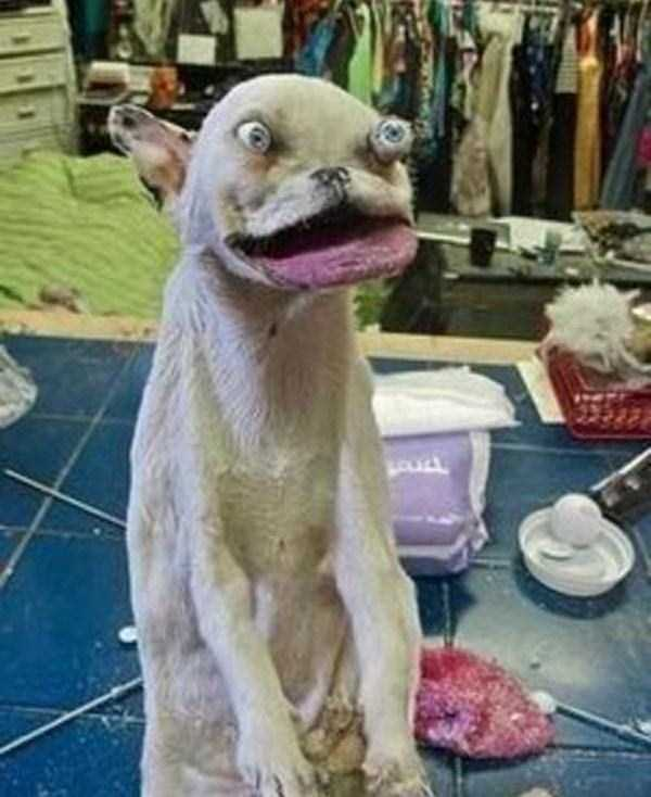 42 Cringeworthy Taxidermy Fails Klyker Com