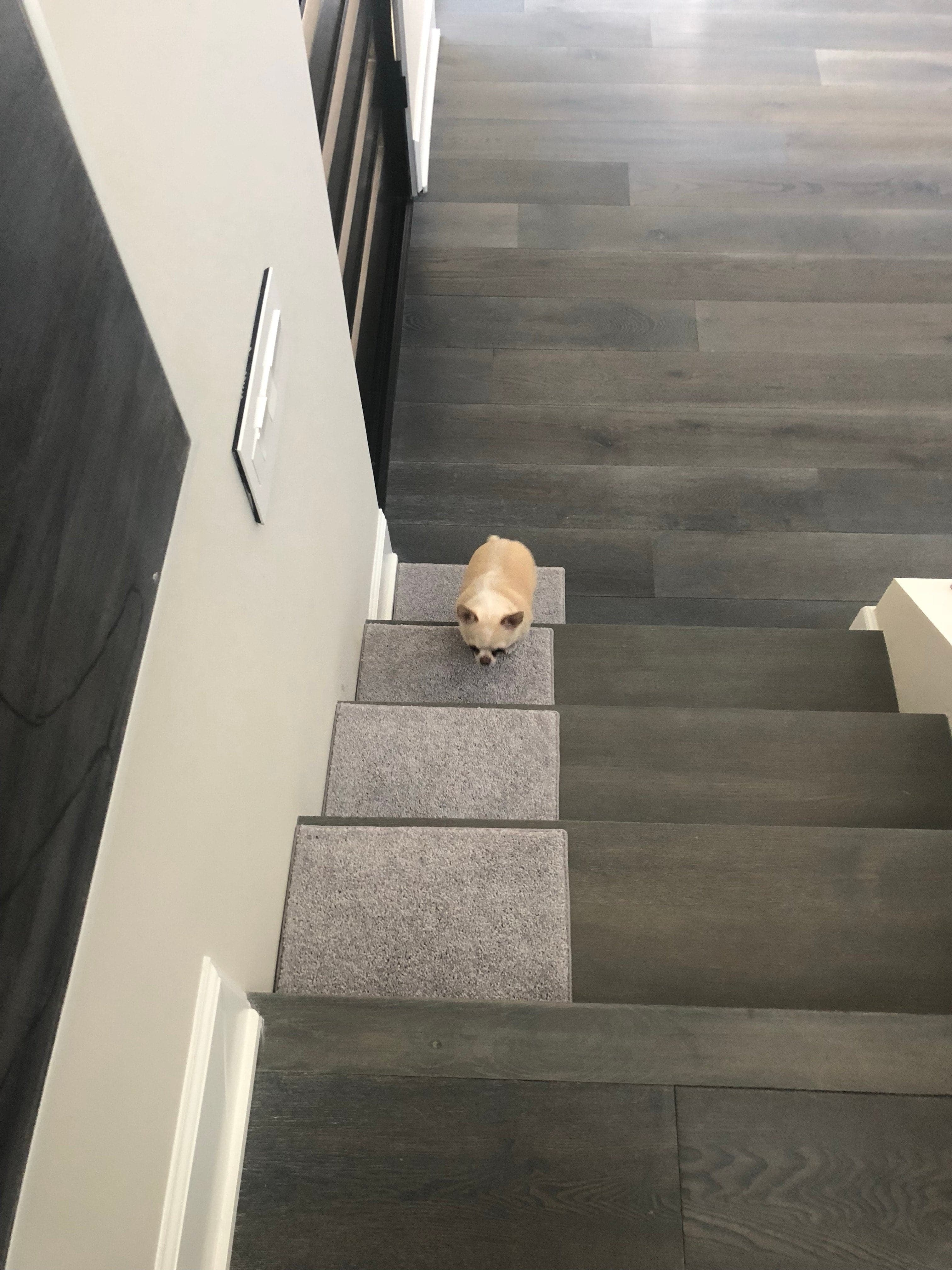 Orchard Mills Aii Dog Assist Carpet Stair Treads | Modern Carpet Stair Treads | Beige Carpet | Wood | Basement Stairs | Grey | Modern Trellis