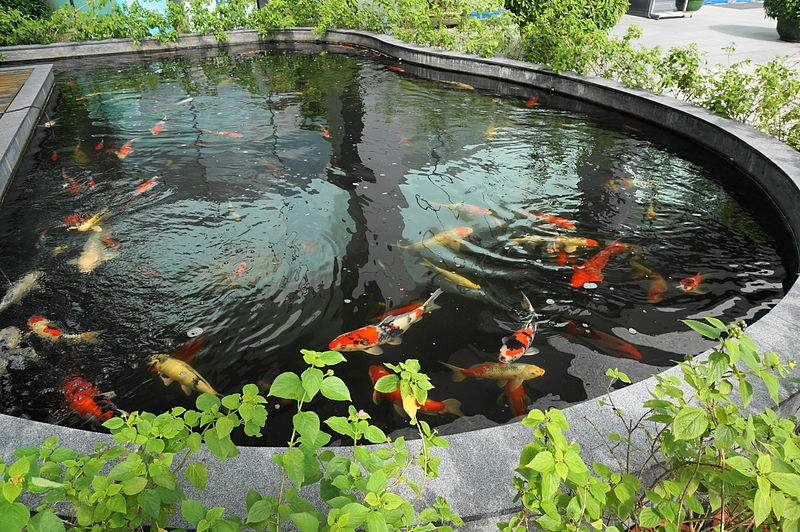 Above Ground Koi Pond Construction