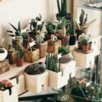 Виды кактусов : разновидности домашних и лесных суккулентов, описание клейстокактуса и плоского кактуса, длинного и ядовитого