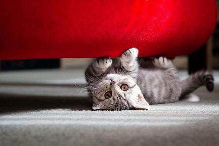 Katje scherpt klauwen over de bank
