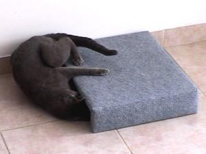 Кот и мышка - игра под диваном