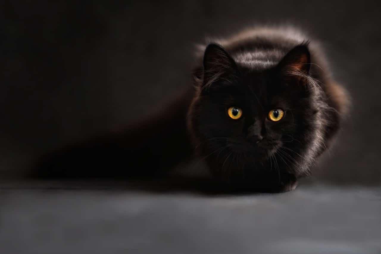 Was Fellfarben über Katzen verraten - Fakten verständlich erklärt