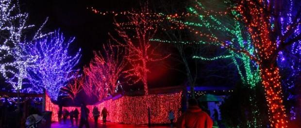 Zoo Lights Pdx