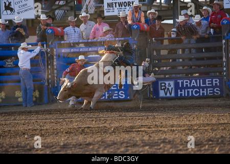 Rodeo Bull Chasing Cowboy Stock Photo 276697284 Alamy