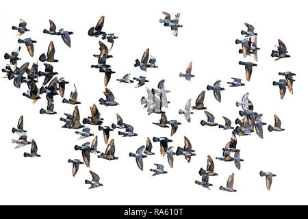 Group Of Pets And Wild Animals Against White Background