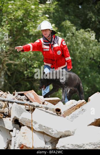 Border Collie Rescue Tampa