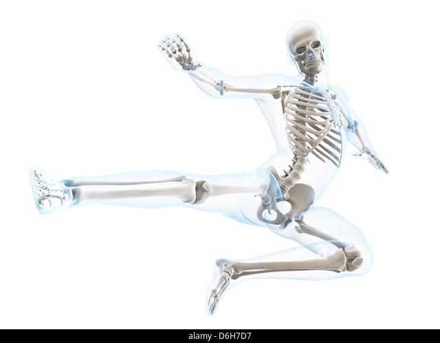 Tortoise Skeletal Anatomy