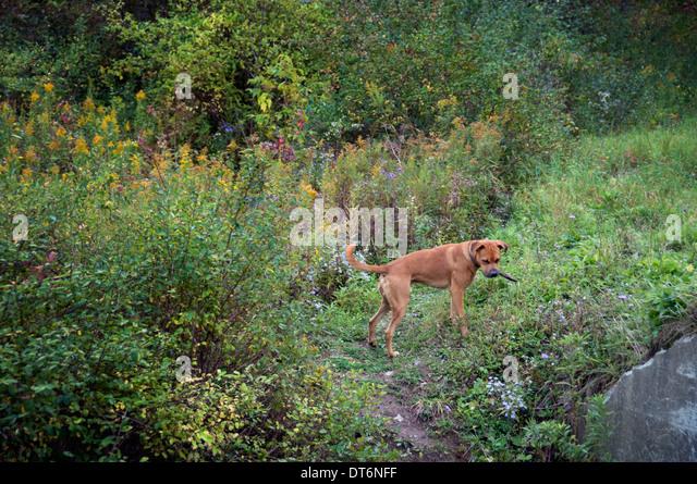 Shadow Boy Running Woods