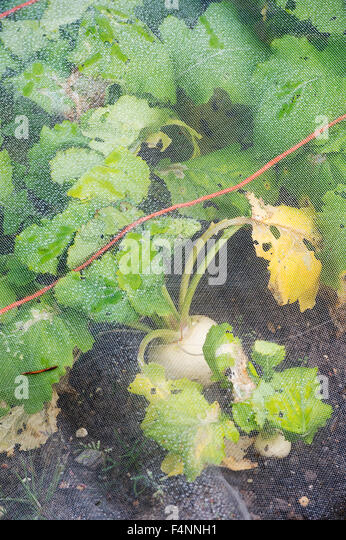 Insect Netting Vegetables