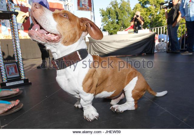 Wall Dog E Ugliest Worlds