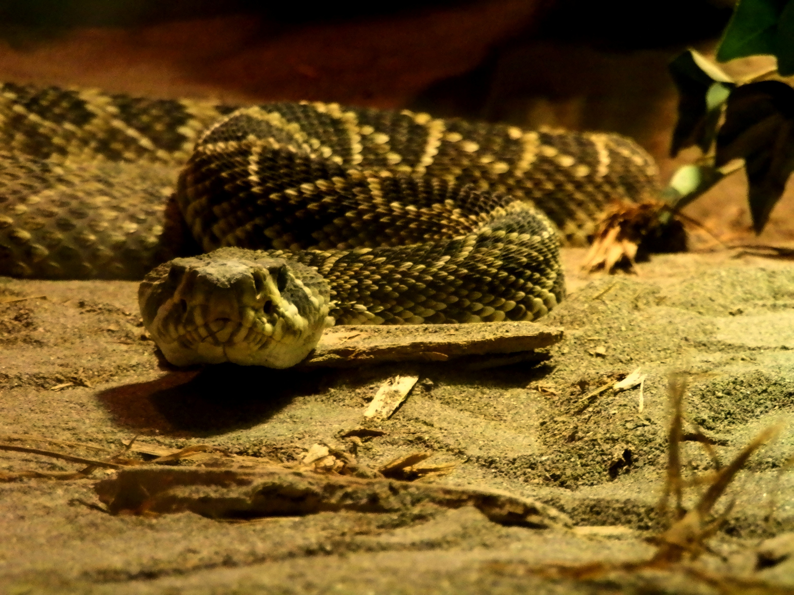 Indian River Reptile Zoo | Lady of the Zoos