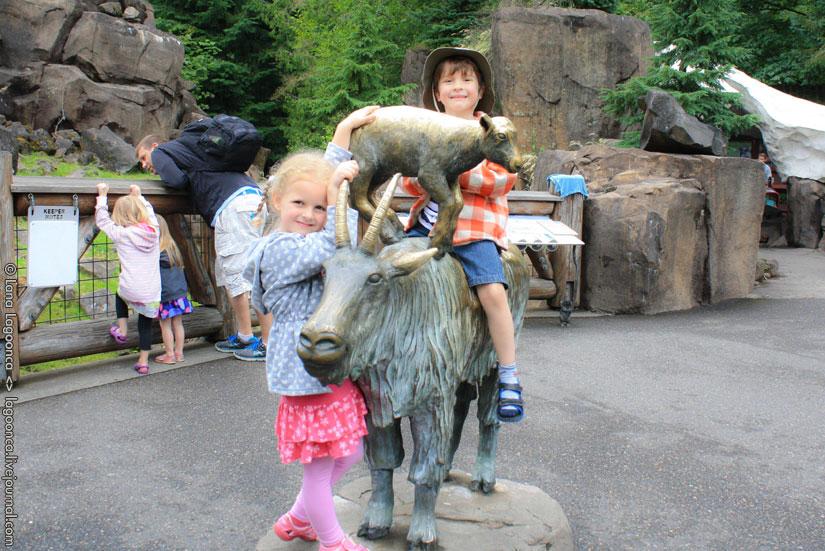 video portland zoo - 825×551