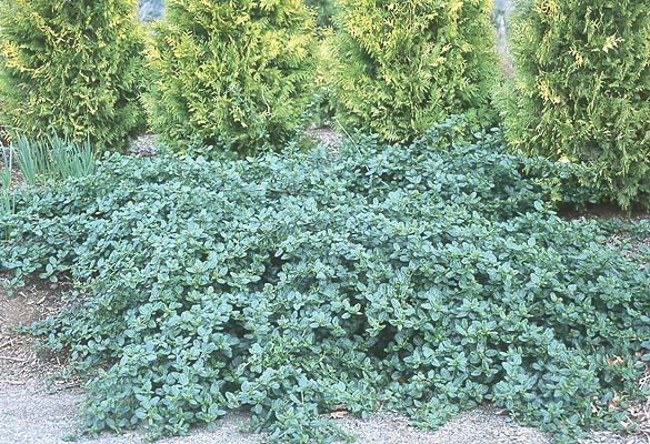 What Plant Above Ground Garden