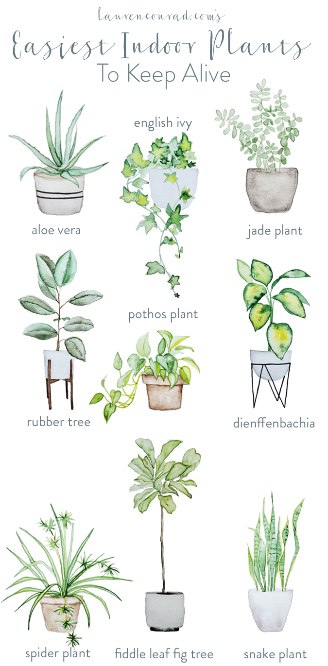 Easy Maintain House Plants