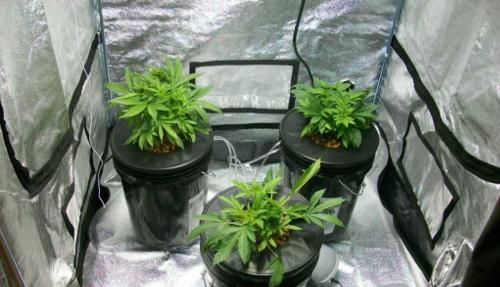 Grow Best System Cannabis