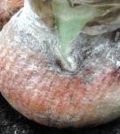 Arderea roșie (stomporoză)