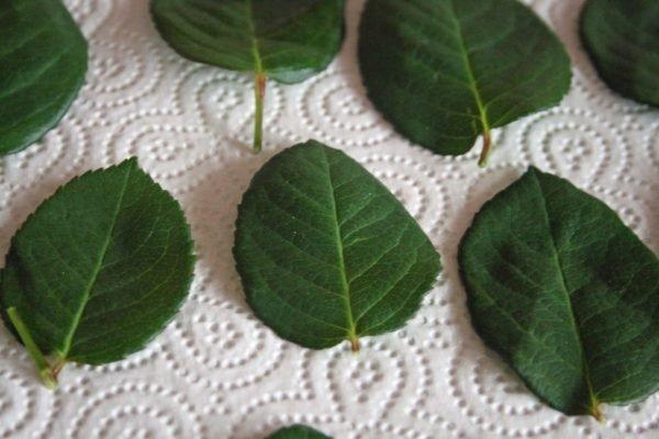 Peçeteye gül yaprakları