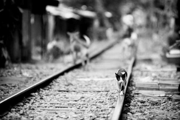 Essentials of Documentary Photography documentary cat on rails  Documentary photography