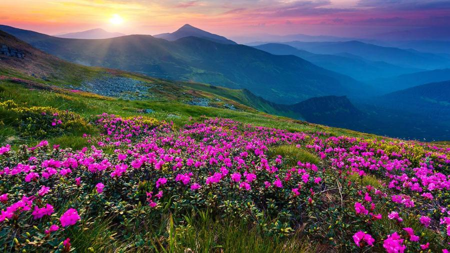 Mountain Flower Live Wallpaper   Revenue   Download estimates     phone
