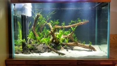 Vanish's 150G Tall DIY Underwater Island - The Planted ...