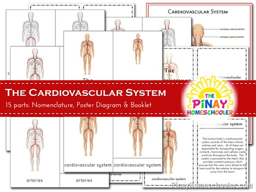 Circulatory System Learning Materials | The Pinay Homeschooler