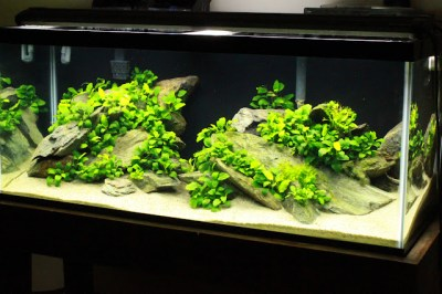 Tharsis' 75 gallon - The Rhode Island Chapter - The ...