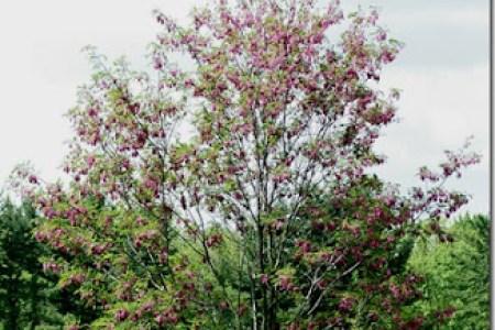 Flower shop near me black locust tree pink flowers flower shop flower shop black locust tree pink flowers mightylinksfo