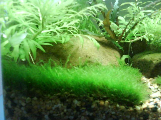 Aquarium Plants Online Canada