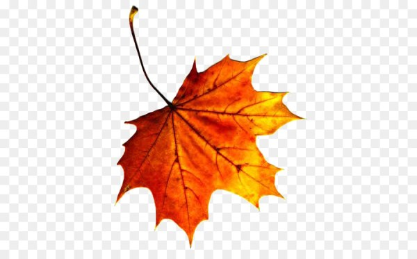 fall leaves png # 23