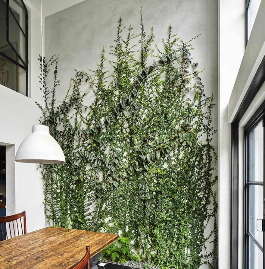Indoor Hanging Vines