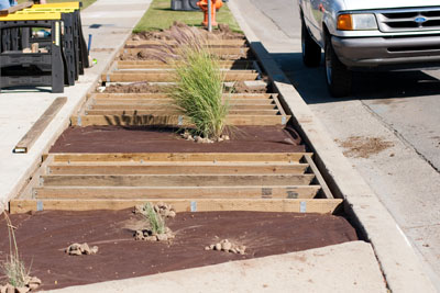 frontyard parkway xeriscaping (drought tolerant) during Xeriscaping... Parkway complete