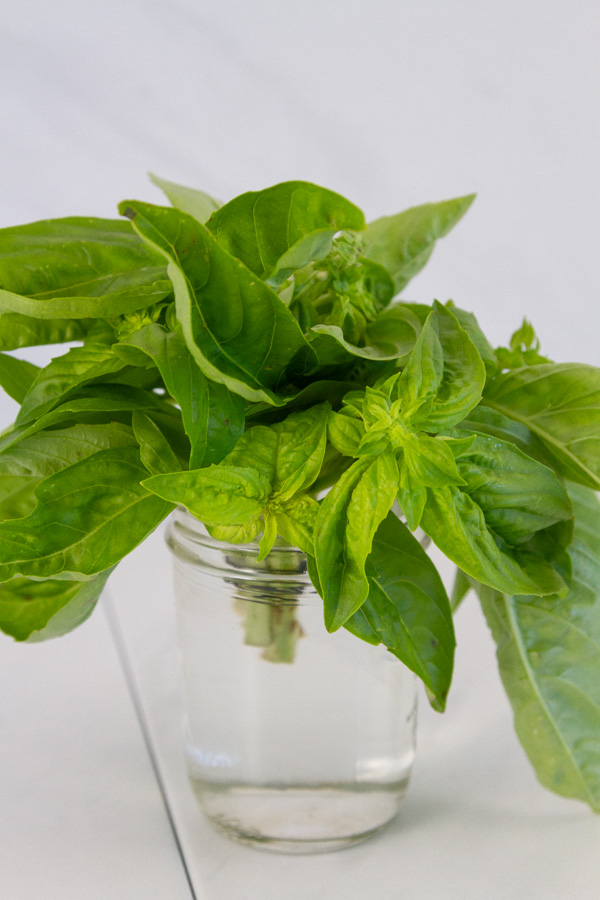 fresh basil in a glass jar filled with water.