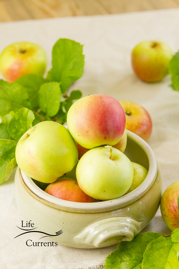 a bowl full of fresh apples off of the tree and some apple tree leaves on a cloth background