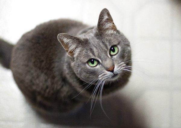 Self-imposed quarantine preparedness personal note image of Miso kitty