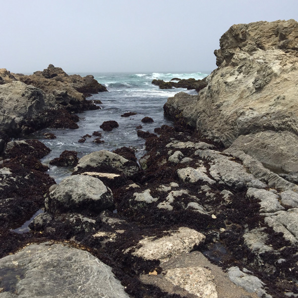 some of the exposed tide pools at Glass Beach
