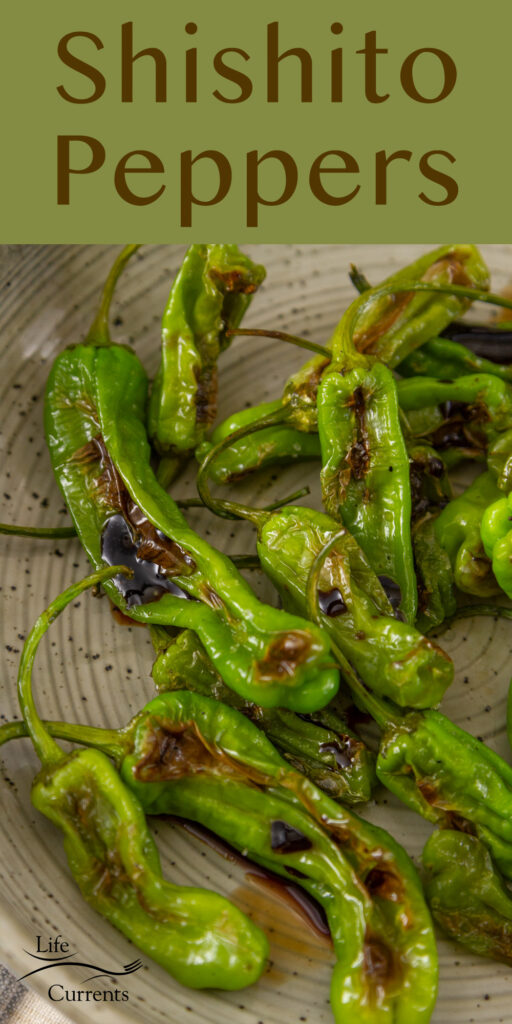 Shishito Peppers charred and cooked with salt and balsamic vinegar.