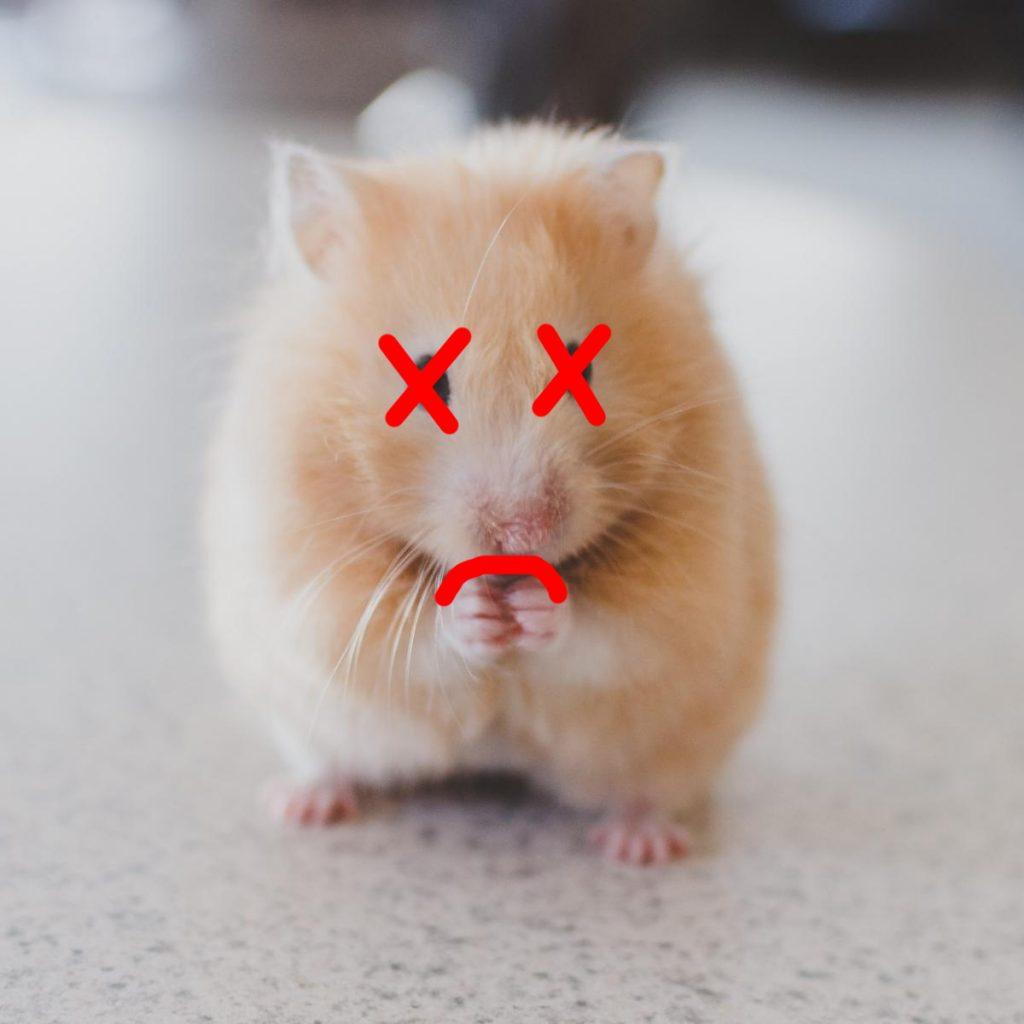 So reduzieren Sie das Leben des Hamsters