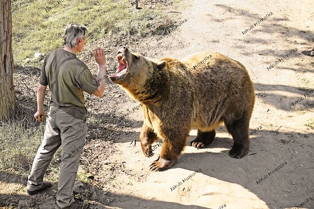 man eaten by bear - 639×426