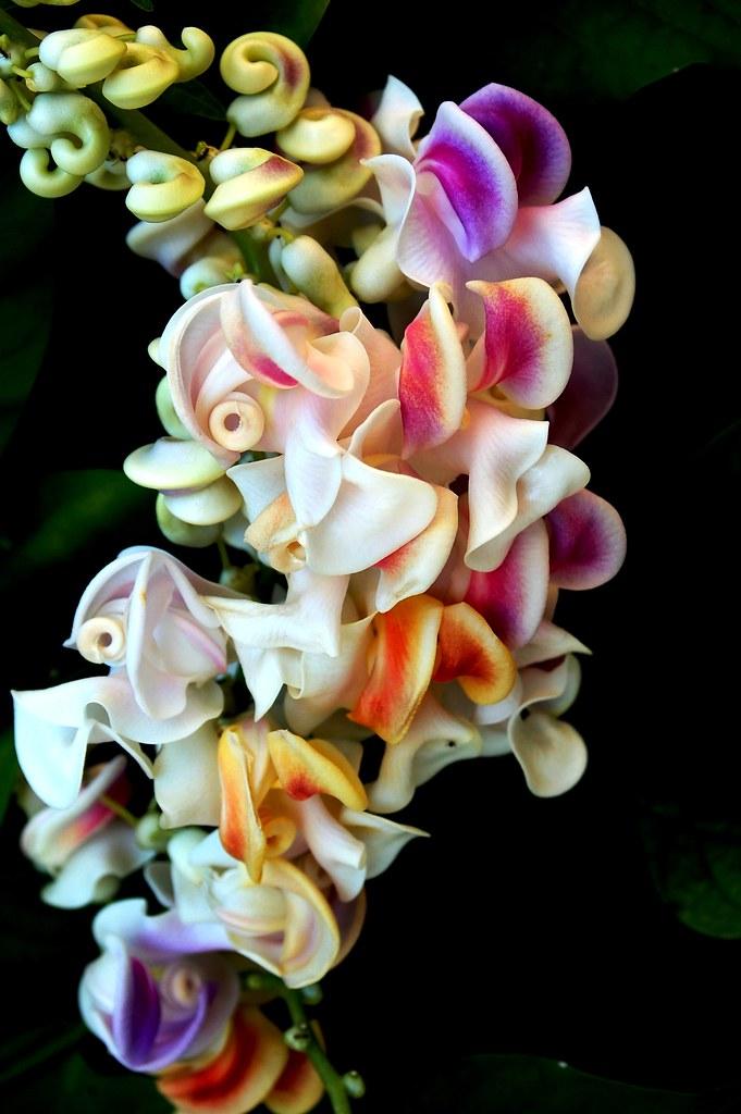 Reynolda Gardens The Most Beautiful Flower Reynolda