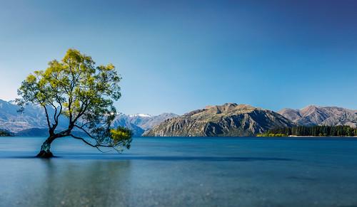 The Wanaka Tree Lake Wanaka New Zealand All Images