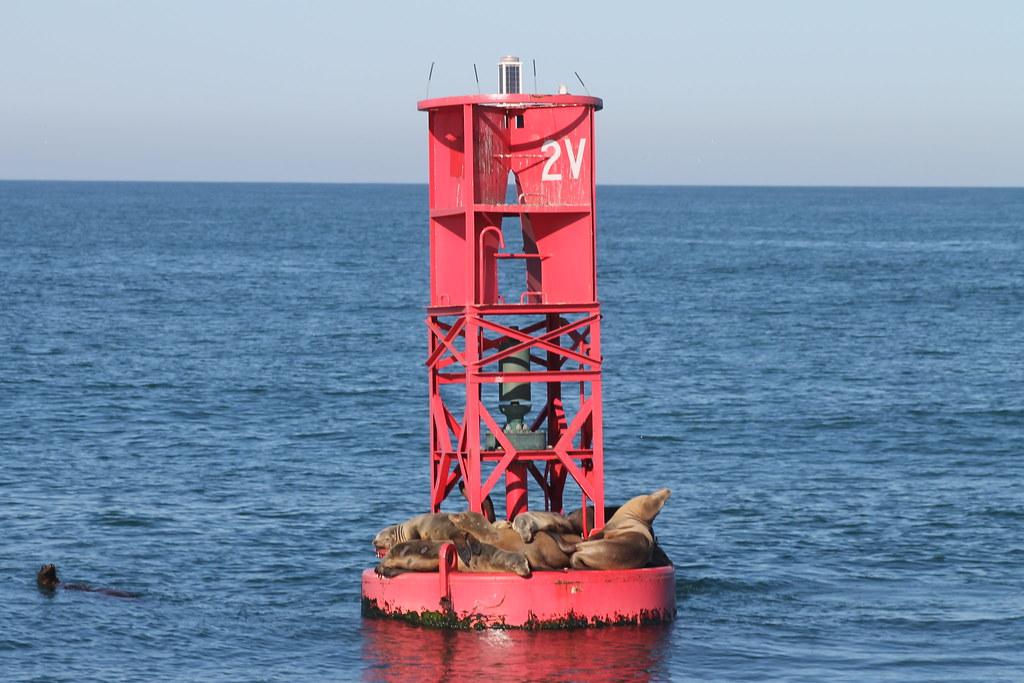Img 2369 Ventura Red Whistle Buoy California Sea Lions