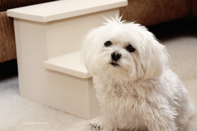 Parker Posey and his new wooden pet steps