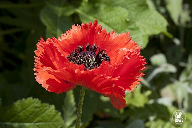 Beautiful flowers at The Missouri Botanical Garden. www. livelaughrowe.com