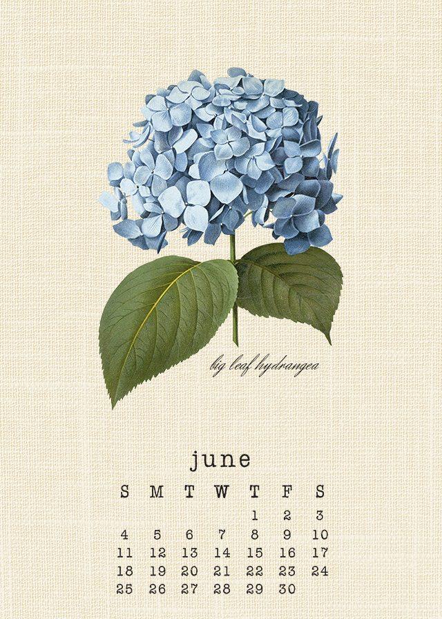 Beautiful June 2017 printable Botanical Calendar. livelaughrowe.com