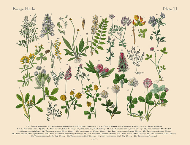 Herbs & Spices Poster Print