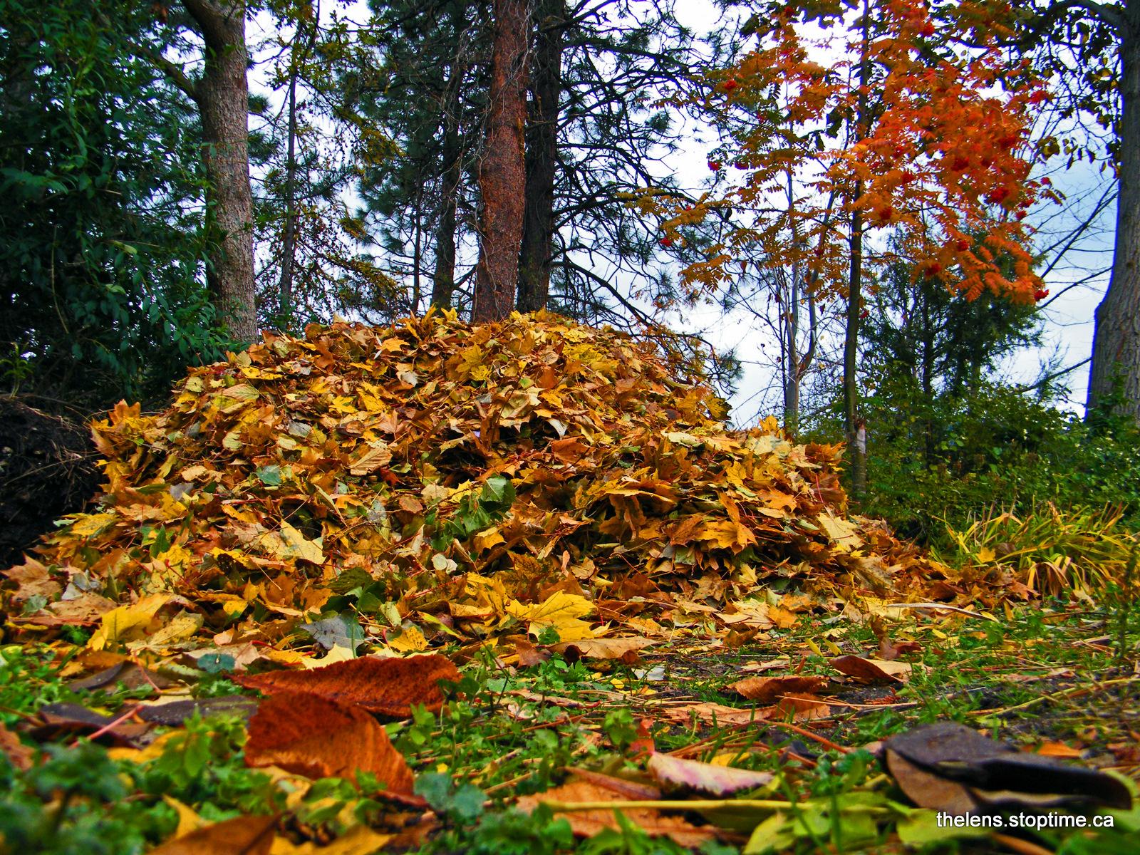 pile of leaves - HD1600×1200