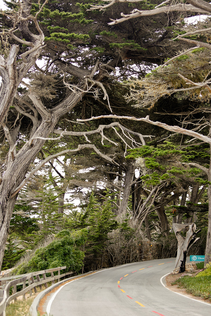 A Quick Guide To The 17 Mile Drive Monterey Trip Giveaway