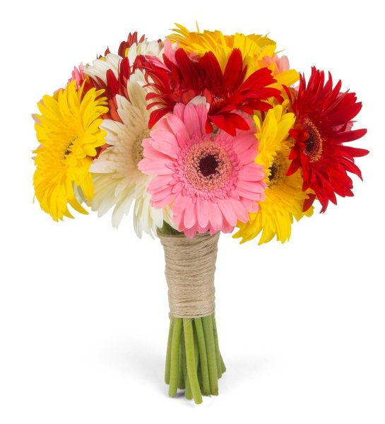 Multicolor Gerberas   Colorful Sunrise 20 Multicolor Gerberas   Colorful Sunrise