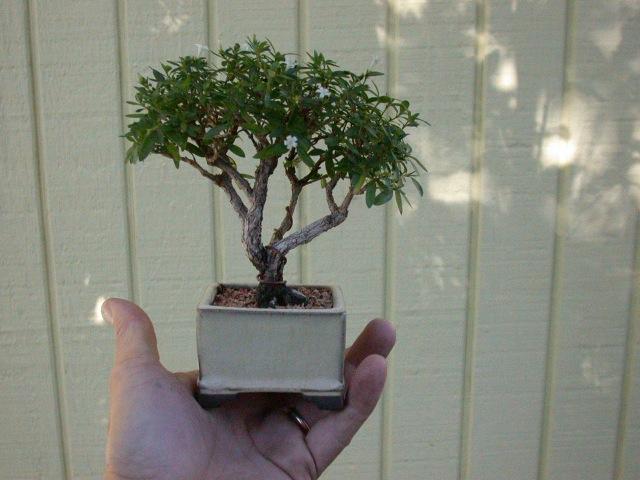 Tiny Trees Http Lomets Com